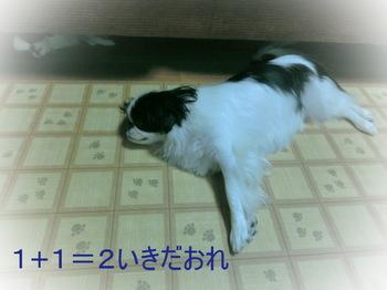 CIMG3934.JPG